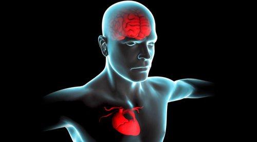 Мудрость человека зависит от ритма сердца