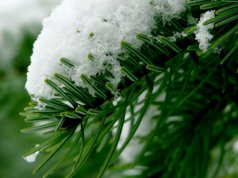 Жизнь в зеленых районах защищает сосуды и сердце