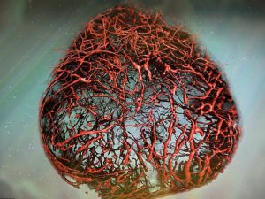 В лаборатории впервые вырастили сосуды человека