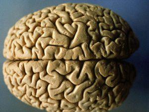 Женский мозг в среднем моложе мужского