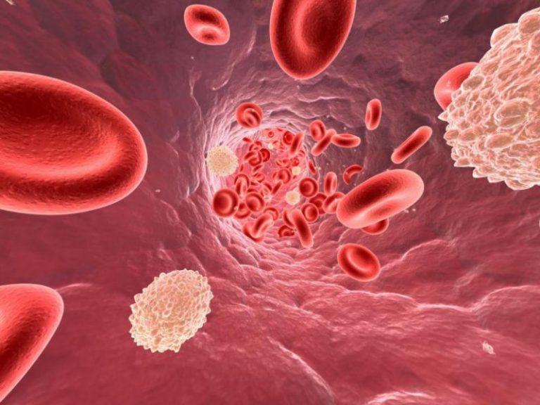 Как именно холестерин влияет на наше здоровье