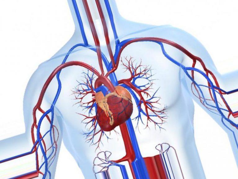 Ученые нашли способ лечения ишемии сердца