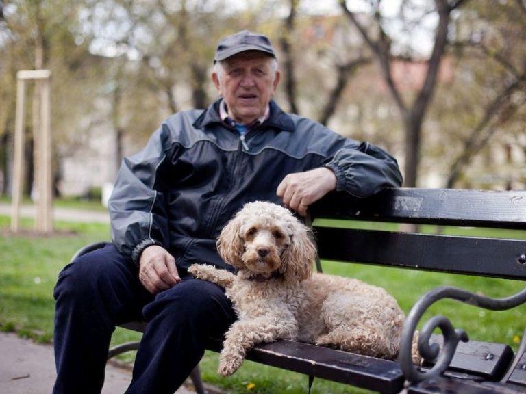 Ученые: диабетикам необходимо иметь специально дрессированных собак