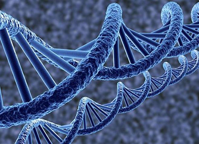 Ученые нашли новые вариации генов, ответственные за сердечный ритм
