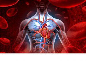 Какие заболевания сердца выявили у ставропольцев?