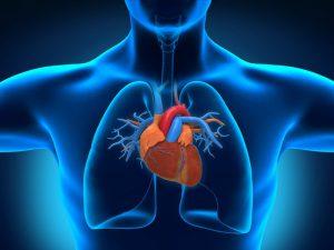Найден новый механизм лечения дефектов сердца