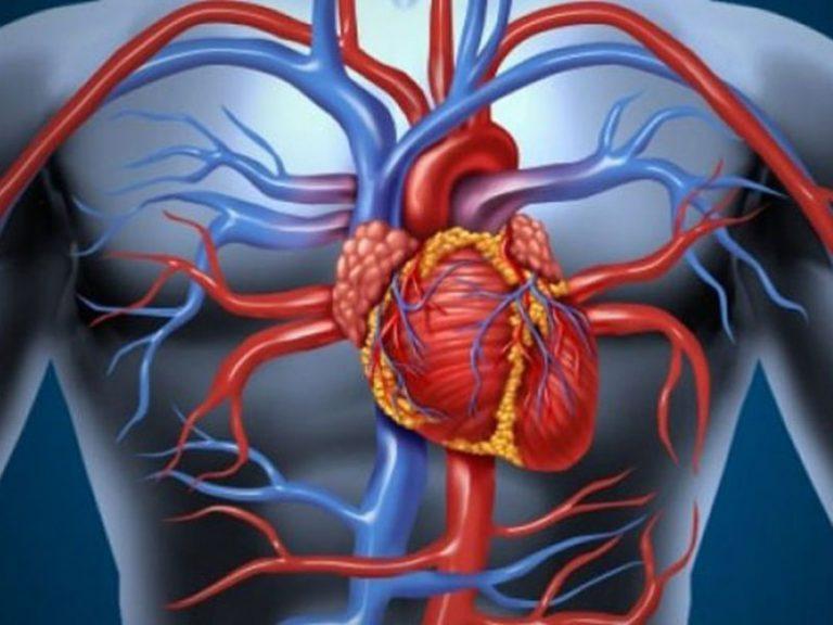 Симптомы, которые сигналят о патологических изменениях в сосудах и артериях