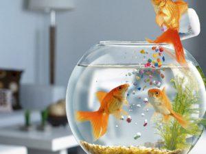Чем кормить рыбок