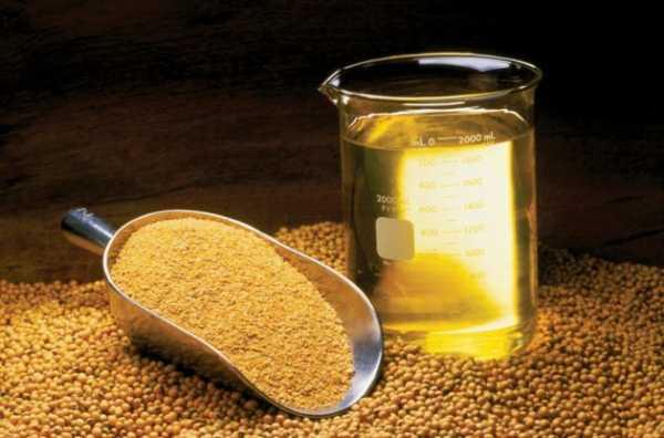 Масло из сои признано вредным для головного мозга