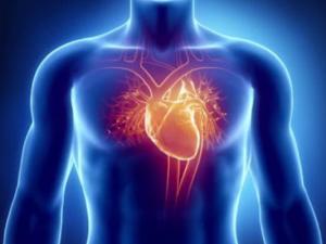 Ученые собрали искусственное сердце, максимально напоминающее настоящее
