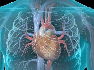 Генетики узнали, как восстановить тело после сердечного приступа