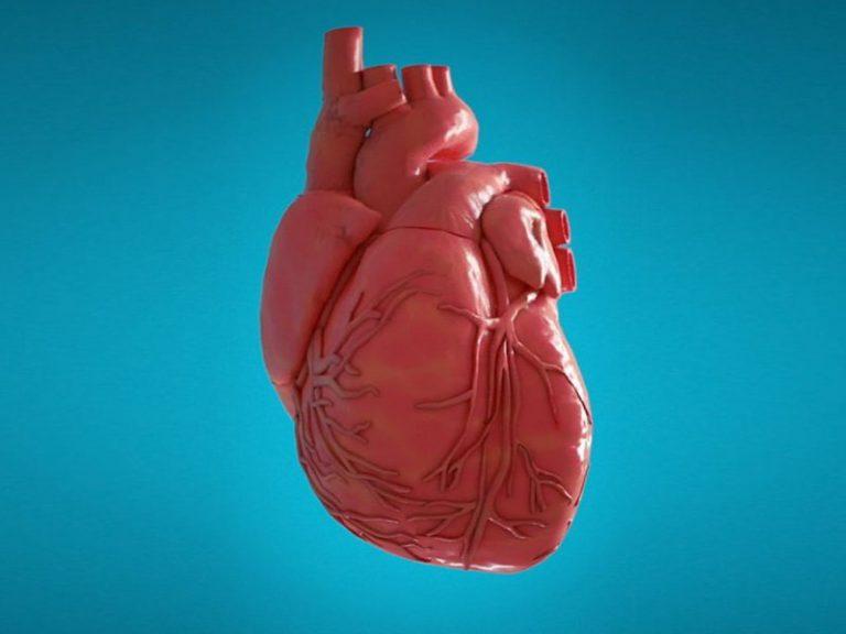 Медики определили идеальный перекус для сердца