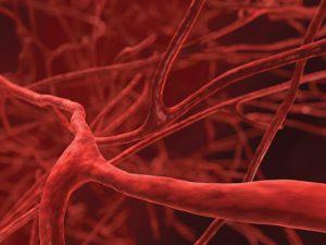 3 натуральные средства для профилактики тромбообразования и очищения сосудов