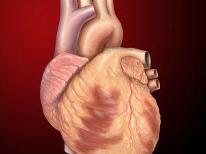 Новый материал для защиты стволовых клеток помогает снизить риск сердечного приступа