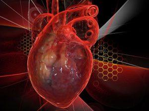 Назван овощ, снижающий риск опасных болезней сердца
