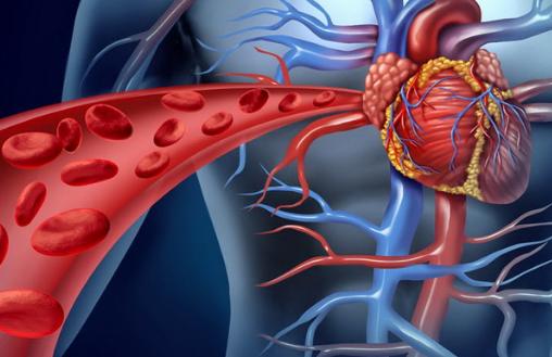 Простые способы очищения сердечной мышцы
