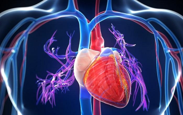 Инженеры придумали, как избежать пересадки сердца