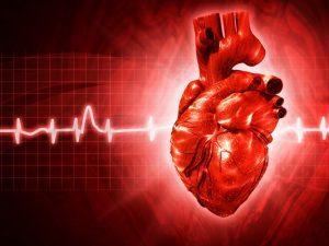 Если сердце — это мышца, то почему оно не устает