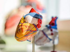 Названа одна из главных причин сердечной недостаточности