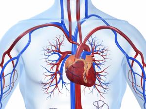 Названы способы предотвратить развитие ишемической болезни сердца