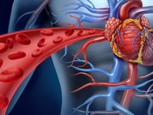 3 добавки, которые нужно принимать для здоровья сердца, и одна, которой следует избегать
