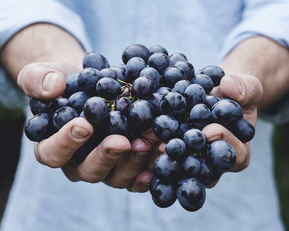 Ежедневное употребление винограда может защитить от болезни Альцгеймера