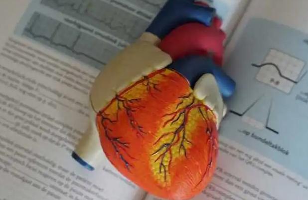 Ученые назвали продукты, полезные для сердечно-сосудистой системы